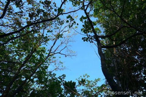 <マレー半島縦断2000kmその14>ミャンマー編⑧ ニャウン・ウー・ピー島のハイキングツアーに参加♪